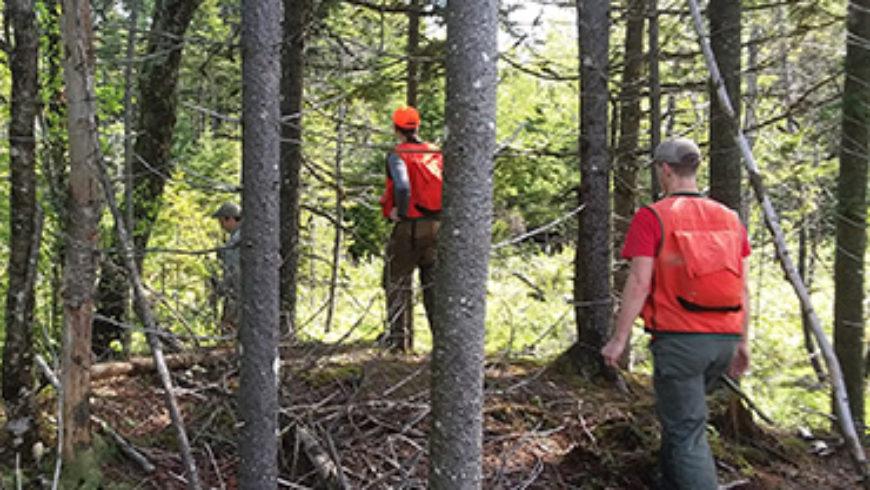 Molpus Woodlands Group Adirondacks