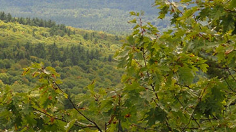NEFF Hersey Mountain Wilderness