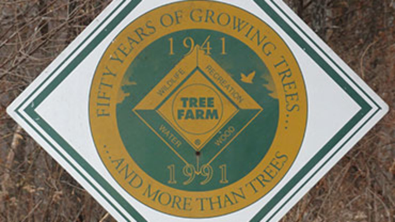 UCC Shannondale Tree Farm